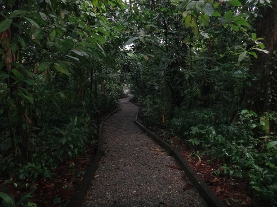 The Lodge and Spa at Pico Bonito :                                     Trail pour se rendre à notre cabine