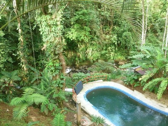Agua Inn:                   pool and overhead forest canopy