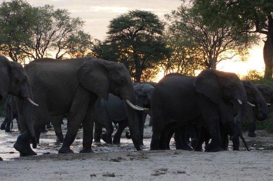 Bomani Tented Lodge:                                     gli elefanti non mancano