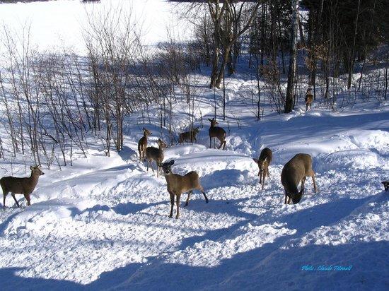 Duhamel, Canada:                                                                         Situé en plein coeur d'u