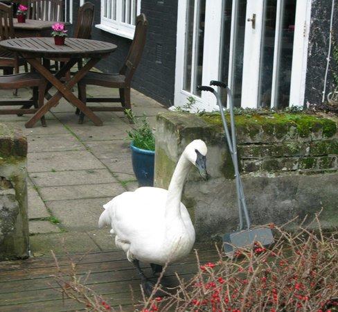 Sheene Mill: swan