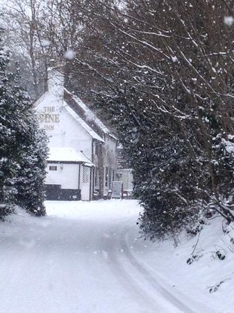 The Vine Inn:                   in the snow!