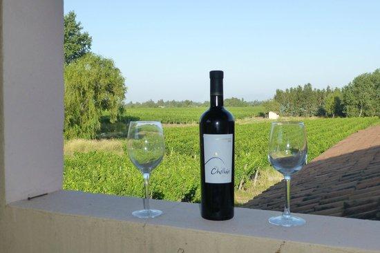 Vina Chillan :                   ecological wine