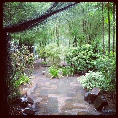 تانجونج رهو ريزورت:                   rain                 