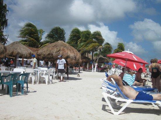 Green Iguana :                                                       Beautiful Beach