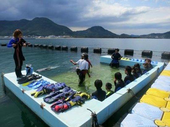 Japan Dolphin Center :                   イルカと泳ぐ前に説明を受けます