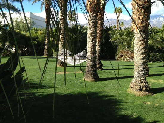 Parker Palm Springs:                   Hammocks and Palms