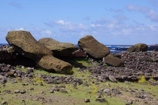 Ahu Akahanga:                   Moai fallen face down at left and middle