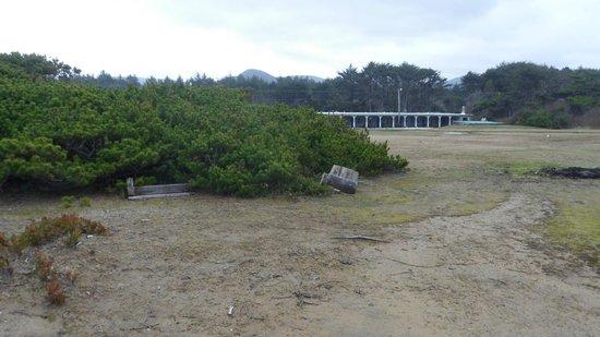 Deane's Oceanfront Lodge: Shrubs