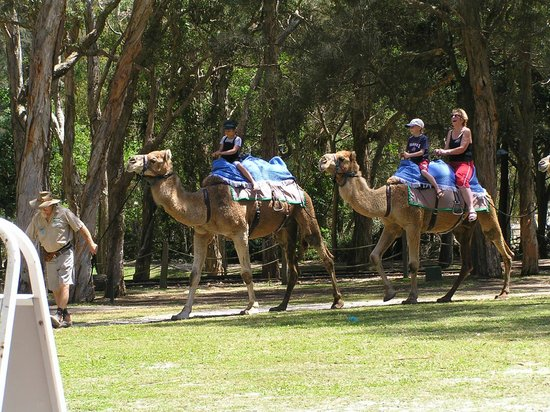 Currumbin Wildlife Sanctuary:                   camel ride