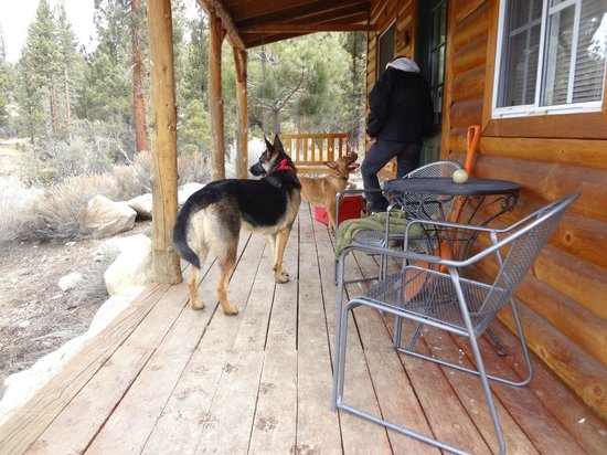 Cienaga Creek Ranch:                   Jack (the ranch dog) greeted us on our porch every morning.