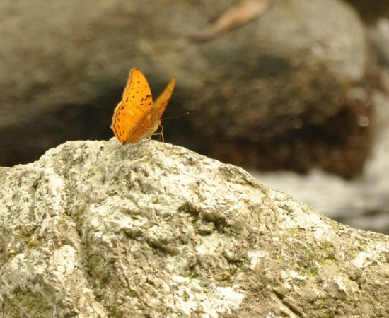 Mossman Gorge: beautiful butterfly enjoying the sunshine