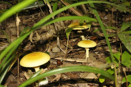 Mossman Gorge: Interesting mushrooms