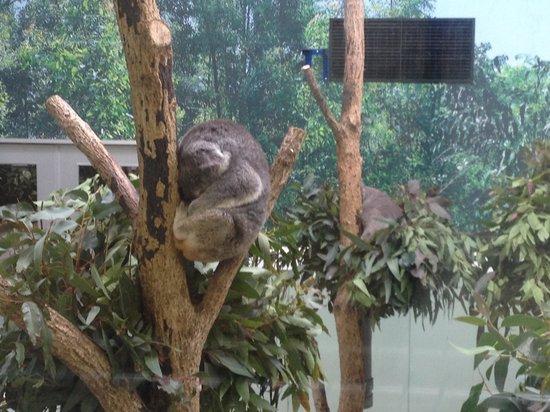 Hirakawa Zoological Park
