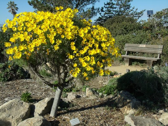 The Robert J. Lagomarsino Visitor Center at Channel Islands National Park:                                     Nature Trail