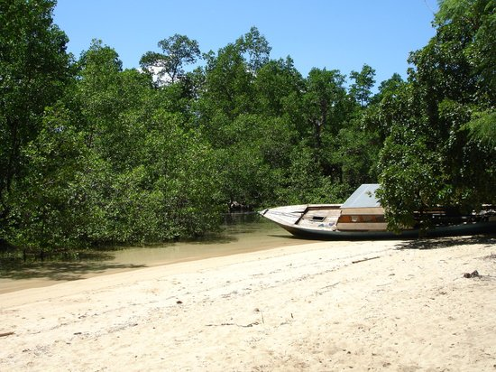 Living Colours Dive Resort:                                     Mangroves and beach