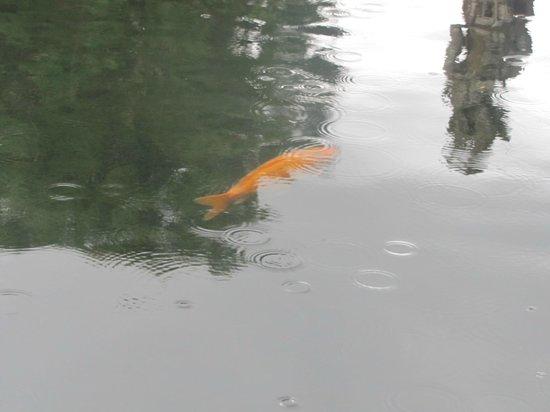 Tirta Gangga:                   fish