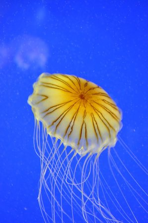 Aquarium La Rochelle:                   Aquarium de la rochelle