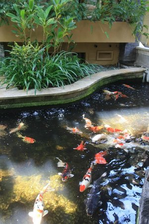 Risata Bali Resort & Spa:                   Fish pond