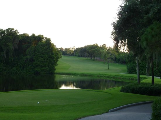 Innisbrook, A Salamander Golf & Spa Resort:                   Innisbrook Island course hole 10 Florida is not flat! ;)