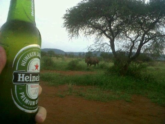 Jaci's Tree Lodge:                   Enjoying a Heineken with Rhino's looking on