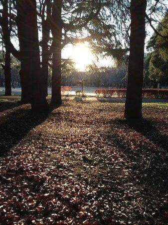 Kinuta Park:                   冬の落日