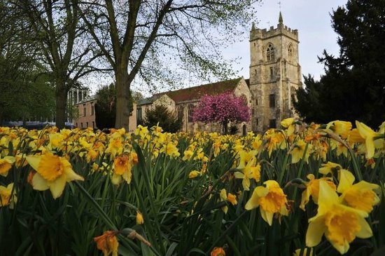 Salisbury Arts Centre:                   The grounds in springtime
