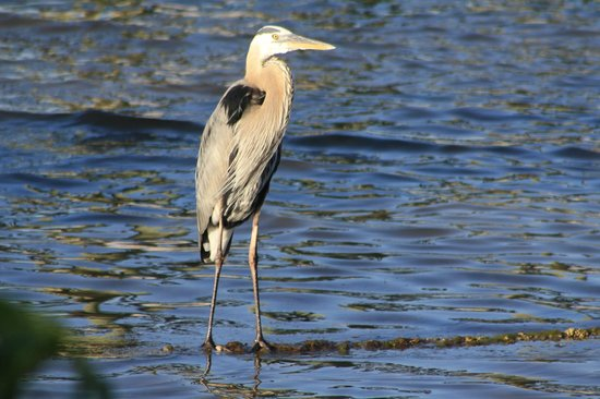 Davis House Inn: The river makes for great wildlife viewing