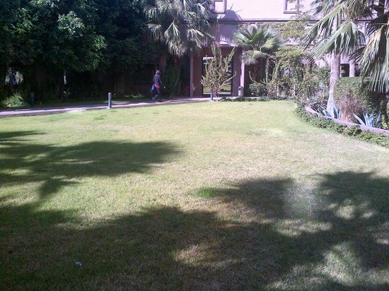 Real Inn Mexicali:                   Garden from parking