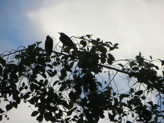 Cabanas San Isidro:                   Birds on the grounds