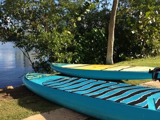 Puerto Rico Paddle Board Tours:                   Paddle Boards