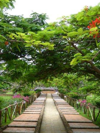 Dongwe Club:                   giardino