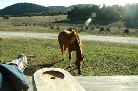 Hill Country Equestrian Lodge:                   visitor at my cabin