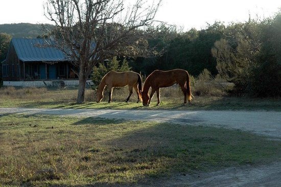 Hill Country Equestrian Lodge:                   view