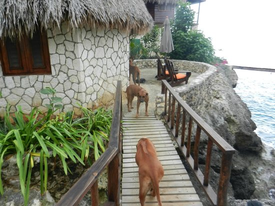 Tensing Pen Resort: The pooches