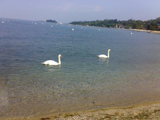 La Quiete Park Hotel:                                     lago a 100 m dall'hotel la quiete