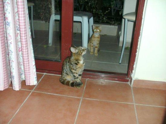 Lemas Suite Hotel:                   Gott om katter