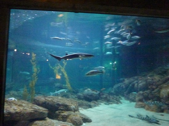 Our View In Monterey Aquarium As We Slept Picture Of
