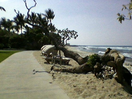 Beach Tree Bar and Lounge: Fallen beach tree