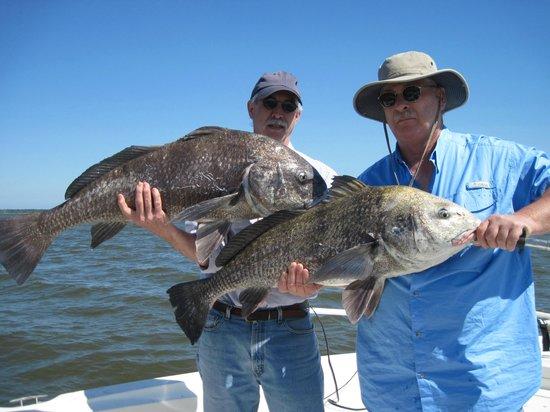 Shore Thing Fishing Charters: black drum