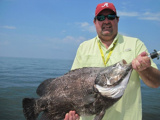 Shore Thing Fishing Charters: triple tail
