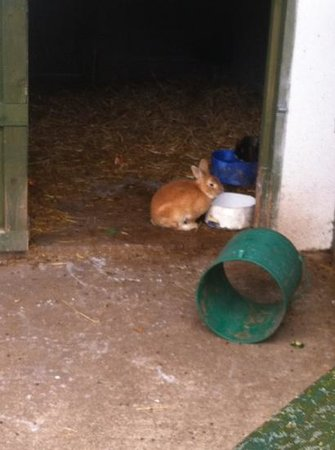 Amber Springs Hotel and Health Spa:                   rabbit in petting farm.