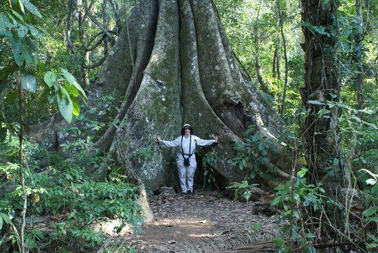 Inkaterra Reserva Amazonica: Ironwood tree