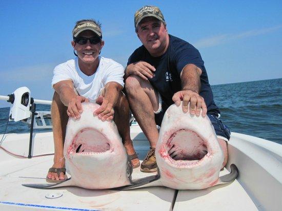 Shore Thing Fishing Charters: big sharks