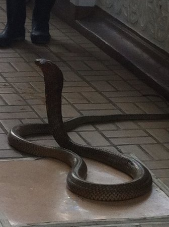 Snake Farm (Queen Saovabha Memorial Institute): Snake farm Bangkok