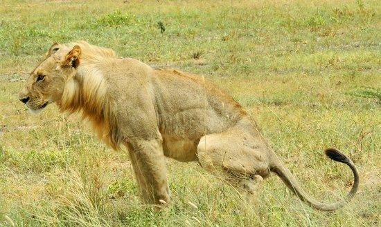 Full-Day Tarangire National Park Tour: king