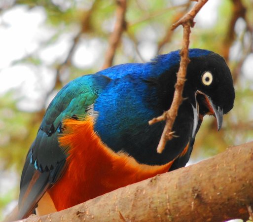 Full-Day Tarangire National Park Tour: fashion bird