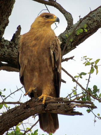 Full-Day Tarangire National Park Tour: eagle