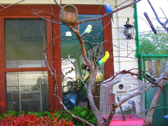 Joaquin's Bed and Breakfast :                   The aviary deck