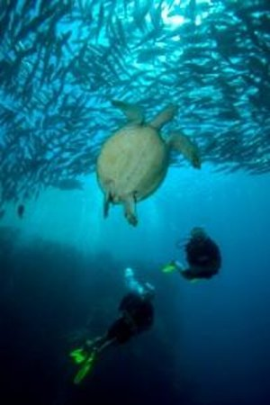 Sipadan Scuba潜水店